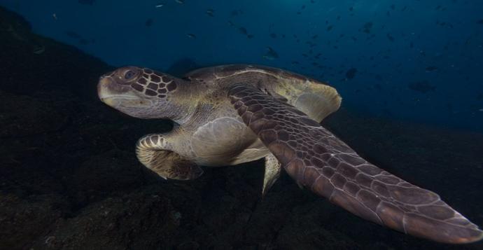 0521-exposicion-fotografica-caribe-magico_0000_tortuga-galapagos