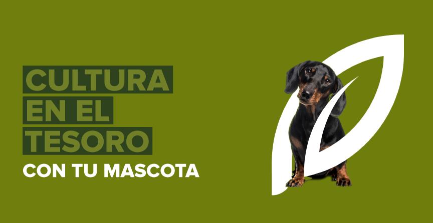 Mascotas Petfriendly - El Tesoro